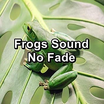 Frogs Sound No Fade