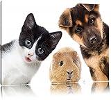 Lustiges Trio Hund Katze Meerschwein Format: 80x60 auf