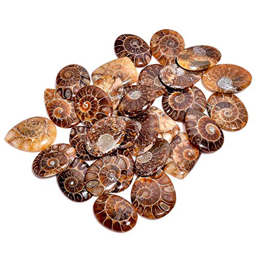Gemkora 3pcs, 25 to 40mm Natural Ammonite Gemstone Cabochon Mix Shape Loose Gemstone Wholesale Cabochons Lot, Jewelry Making Loose Gemstone, DIY, Wire Wrapping, Healing Crystals, Bulk Deal