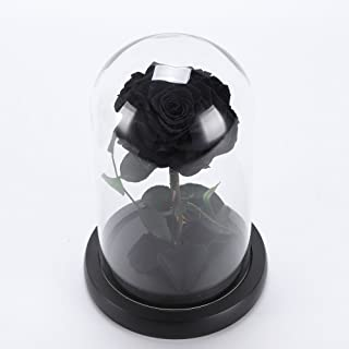 Eapmic Beauty and The Beast Rose Forever Rose Flower Festive Preserved Immortal Fresh Rose with Fallen Petals in Glass Unique Gifts Black Rose