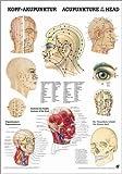 ruediger Anatomía po10/vlam de acupuntura Pizarra, 50cm x 70cm, laminado