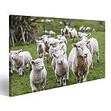 islandburner Bild Bilder auf Leinwand Lämmer und Schaf