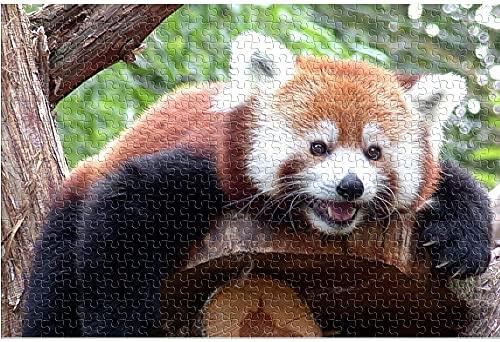 AMTTGOYY Pussel för vuxna 1000 stycken Röd panda liggande Vuxen 1000 pusseldjur Pedagogiska leksaker DIY Present Roligt spel