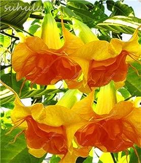 Best purple angel trumpet plant for sale Reviews