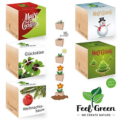 Feel Green Ecocube XmasSet de 5 variétés - 25% Economique dans Le Paquet, Plantes en Bois - Idée Cadeau Durable - Grow Your Own/Culture - Made in Austria