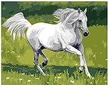 MEEKIS Cavallo Bianco in Esecuzione - Dipinto con Numeri Fai da Te Amici Giocattolo per Bambini Adulti con Spazzole 40X50Cm-No Frame