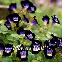 New arrival Torenia fournieri seeds 200pcs Flowers seeds Home&Garden Bonsai Family Diy Plant Courtyard