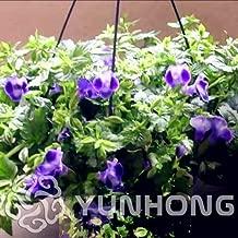 New Arrival Promotion! 100 Pieces/Pack Torenia Fournieri Ornamental Flowers Seeds,Rare Garden Flower Perennial Flower Seeds