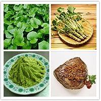200pcs / lot Wasabi Semillas, Semillas de rábano picante japonés Vegetable Seeds Bonsai Plant bricolaje plantas del jardín