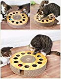 Two cats play with the MIAOXSEN puzzle box by poking their paws through round holes in the top to roll the balls inside. Scratchpads line the outer edge of the circular box.