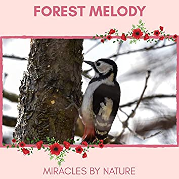 Forest Melody - Miracles by Nature