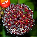 new 2018!home bonsai garden rare hoya orchid,hoya carnosa plant orchid flower flores series 100 pcs/package,#17ouof : 13