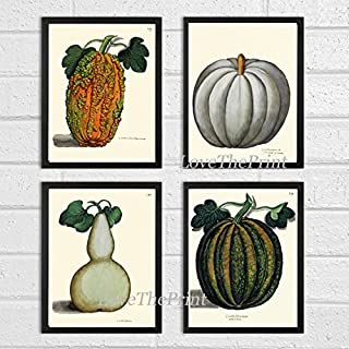 Botanical Set of 4 Prints Antique Beautiful Pumpkin Gourd Green White Orange Fall Garden Nature Home Room Decor Wall Art Unframed ALD