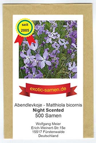 Abendlevkoje - duftet abends und nachts - night scended - 500 Samen
