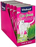 Vitakraft Cat Grass Seed Kit Wheatgrass for Pet, Grow Indoor Treat in Tray 120 Gram (Pack of 6)