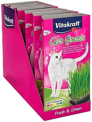 Vitakraft Cat Grass 120 g (Pack of 6)