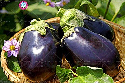 11.11 Big Promotion! 100 pcs/lot géant graines d'aubergine violet jardin graine légume vert et maison plante herbe organique 1
