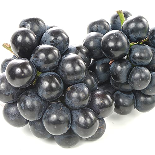 ぶどう ナガノパープル 2房(350g×2房) 長野県産 葡萄 ブドウ 食品 国華園