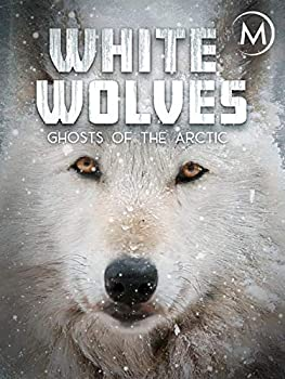 White Wolves  Ghosts of the Arctic