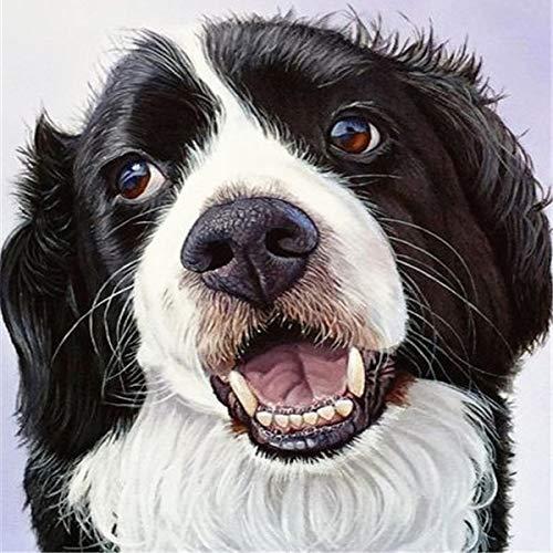 neivy Dog Adult Diamond Painting Kit mit einem vollständigen Satz von Werkzeugen und Zubehör 5d Diamond Art Home Decoration Kunsthandwerk Home oder persönlicher Gebrauch Ideale(Quadrat 30x30cm)