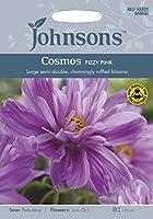 JOFL 英国ジョンソンシード Cosmos Fizzy Pink コスモス・フィジー・ピンク