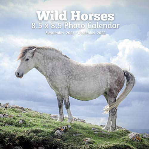 Wild Horses 8.5 X 8.5 Calendar September 2021 -December 2022: Monthly Calendar with U.S./UK/ Canadian/Christian/Jewish/Muslim Holidays-Horses Animal Nature