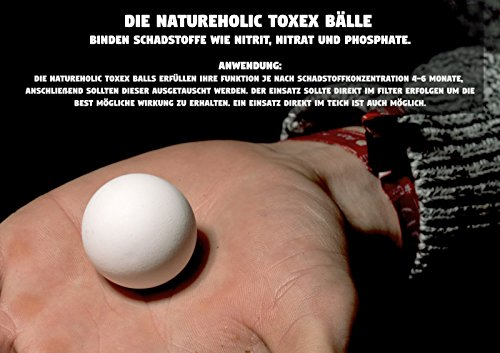 Teich Posthornschnecke, 3 St. + 1 x NH TOXEX BALL – Der lebende ALGEN ENTFERNER für den Gartenteich! GESUNDHEITS POLIZEI im Gartenteich! - 3