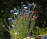 We-Ball Kornblume - gefüllte Mischung - Kornblumen Samen für ca. 120 Pflanzen