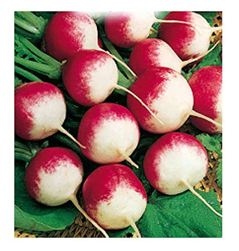 1000 C.ca Radish Seeds National 2 - Raphanus sativus - Emballage d'origine - Fabriqué en Italie - Ravanelli - RV006