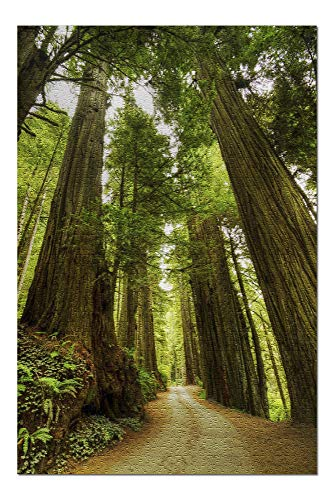 Promini Redwood Forest Road Photography - 1000 Piece Jigsaw Puzzles for Adults Kids, Puzzles for Toddler Children Learning Educational Puzzles Toys for Girls Boys 20' x 30'