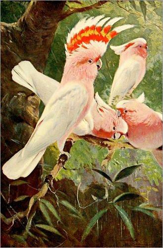 Posterlounge Tableau en Bois 40 x 60 cm: Leadbeater's Cockatoo de Wilhelm Kuhnert