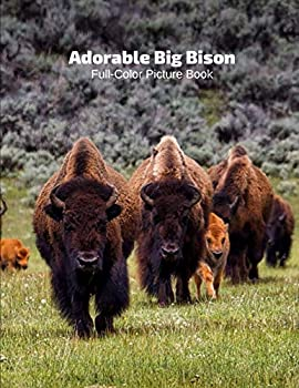 Adorable Big Bison Full-Color Picture Book  Buffaloes Picture Book - Nature American Buffalo Animals