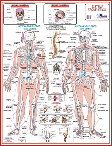MAPA DE ANATOMIA HUMANA - SISTEMA ESQUELÉTICO 1