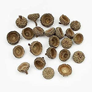 20Pieces Natural Dried flowers Pine cone Acorn Artificial Flower For Home Christmas DIY Garland Wreath Decoration,Acorn cap