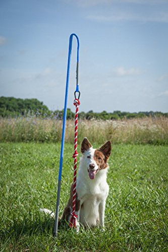 Indoor Tether Tug - Ultimate Inside Rope Toy for Small Dogs