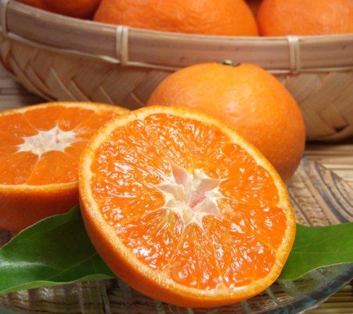 和歌山 有田産 南津海 なつみみかん 約5kg わけあり柑橘 ご家庭用 和歌山県有田みかんの里から