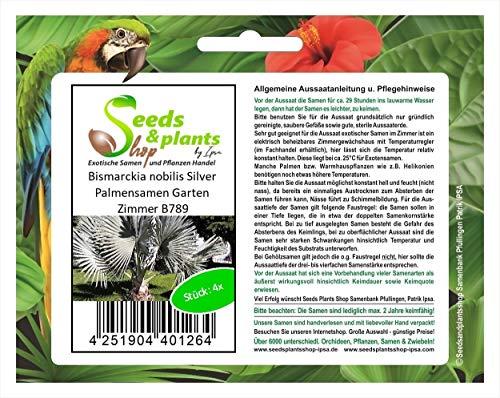 Stk - 4x Bismarckia nobilis Silver Palmensamen Garten Zimmer B789 - Seeds Plants Shop Samenbank Pfullingen Patrik Ipsa