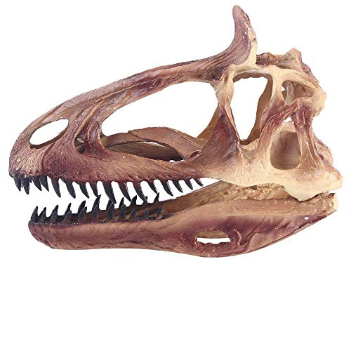 Realista resina Cráneo del dinosaurio de la decoración, los cráneos de juguete Modelo Simulado Hecho a Mano Cryolophosaurus animal for la seguridad del Kids' Ciencias de la Educación Juguetes, crear u