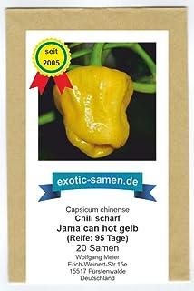 Jamaican hot yellow - scharfes, gelbes Chili - 20 Samen