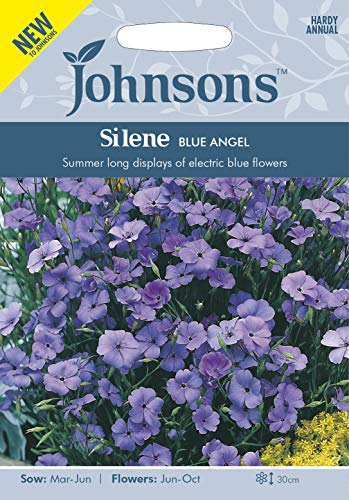 Johnsons Seeds Silene Blue Angel Graines - 1