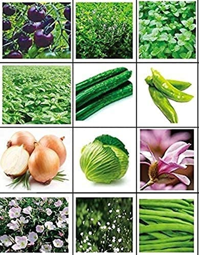 12 Stuks Soorten Groente Zaden 1200 Komkommer Peper Ui Munt Basilicum En Andere Heirloom Non-GMO Groene Groente Zaden…