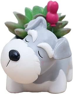 Youfui Cute Dog Flowerpot Small Succulent Plants Container Ornament (Schnauzer)