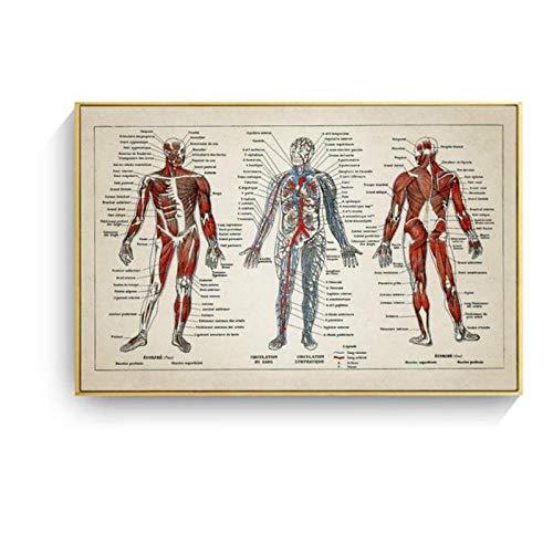 DLFALG Lienzo de anatomía humana, pintura, arte de pared, carteles e impresiones vintage de Hospital, decoración de oficina médica, regalos, 50x70cm sin marco