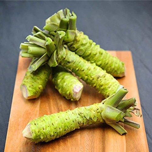 CFPacrobaticS 100 Stück Wasabi Samen Japanischer Meerrettich Gemüse Kräutergewürz DIY Leicht Wachsen, Home Farm Hof Pflanzen, Dekoration Garten Geschenke