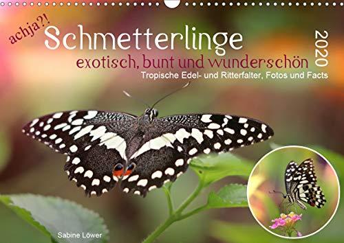 achja?! Schmetterlinge, exotisch, bunt und wunderschön (Wandkalender 2020 DIN A3 quer): Edel- und Ritterfalter im Portrait (Monatskalender, 14 Seiten ) (CALVENDO Tiere)