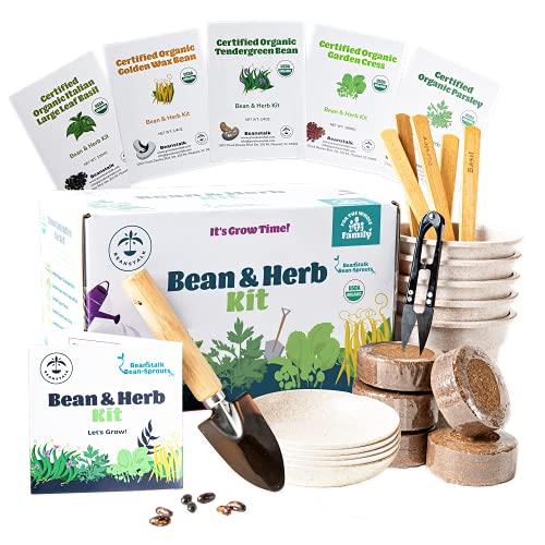 Bean and Herb Starter Garden
