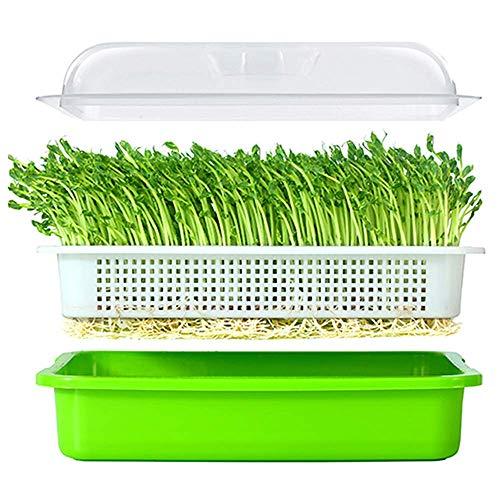 BIGHAVE Seed Sprouter Tray mit Deckel Bean Sprout Grower Germination Kit Weizengras-Züchter
