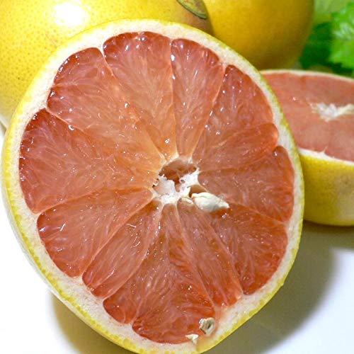 アメリカ・フロリダ産 完熟グレープフルーツ (ゴールデンクラウン)赤果肉 大玉6個入