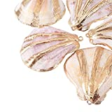 UR URLIFEHALL 5 Pcs Seashell Color Electroplate Sea Shell Charms Pendants for Jewelry Making with Light Gold Iron Findings