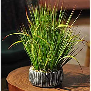 AlphaAcc Small Potted Artificial Grass Plant for Home Kitchen Office Desk Decoration Plastic Life Like Fake Green Plants